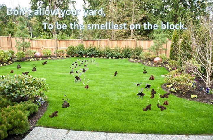 embarrassed by your yard is your lawn littered with doggie landmines